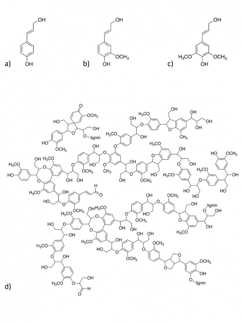 Monômeros e Estrutura parcial de lignina