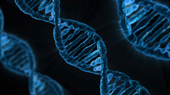Polímero - Estrutura do DNA: polinucleotídeos dispostos no formato de dupla hélice.
