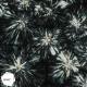 Imagens de cristais poliméricos por microscopia